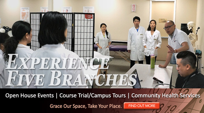Experience Five Branches